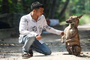 Chủ trại chó Phú Quốc kể chuyện kiếm tiền tỷ từ nuôi chó