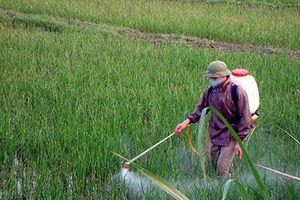 Gợi ý viết thư UPU lần 47: Hãy bảo vệ môi trường đất
