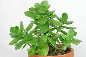 Nhanh tay trồng những loại cây này để đón tài, rước lộc vào nhà dịp đầu Xuân