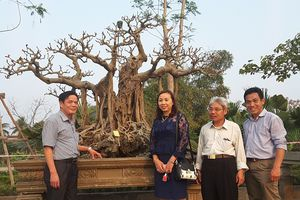 Hà Nội: Quốc Oai kiểm tra công tác chuẩn bị 'Triển lãm Sinh Vật Cảnh và Hội chợ làng nghề truyền thống năm 2018'