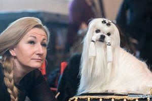 Những chú chó 'khoe dáng' ở Dog Show 2018