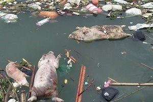 Sớm chấm dứt tình trạng xả rác thải, xác động vật đổ xuống dòng sông Đào