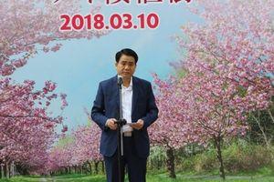 Hà Nội trong tuần: Thủ đô sẽ có hoa anh đào khoe sắc mỗi độ xuân về