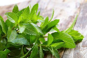 9 loại thảo mộc được coi là 'thần dược' trong lọc phổi