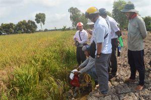 Kiên Giang: Hàng trăm ha lúa có nguy cơ bị thiệt hại do nhiễm mặn
