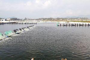 Hoài Nhơn - Bình Định: Ô nhiễm nghiêm trọng nguồn nước ở xã Hoài Mỹ, Hoài Hải