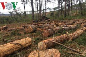 Bắt chủ tịch xã nhận hối lộ tiếp tay cho hành vi phá rừng