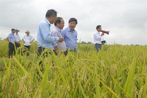 Hiệu quả dự án khuyến nông trồng trọt và lâm nghiệp