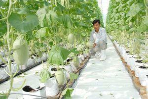 Nông nghiệp An Giang nâng chất lượng sản phẩm