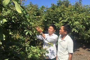 Xuyên Mộc (Bà Rịa – Vũng Tàu): Xã Bông Trang không có nước tưới tiêu