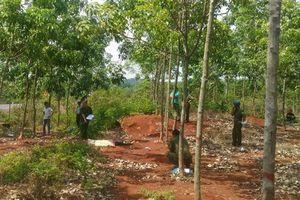 Sơn La: Điều tra nguyên nhân nam thanh niên chết bất thường ở bìa rừng