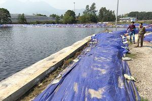 Vì sao hồ Suối Hai ô nhiễm nặng?