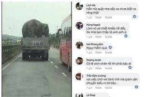 Hú hồn xe tải chở voi 'diễn xiếc' trên Quốc lộ 1A
