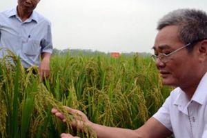 Nhà nông đất Tổ vững tâm sản xuất với phân bón '3 nhành cọ xanh'