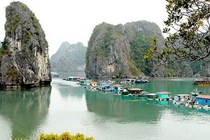 Gìn giữ, phát huy 'tài sản đặc biệt' Vịnh Hạ Long (Kỳ 2): Ngư dân tìm đường về biển