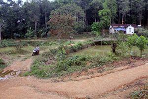 Vụ thu hồi đất rừng tại Tân Kỳ, Nghệ An: Vì đất mất nghĩa