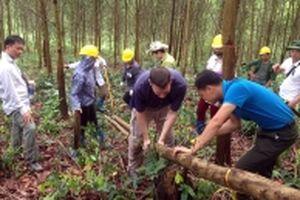 Bắc Cạn trồng rừng gỗ lớn