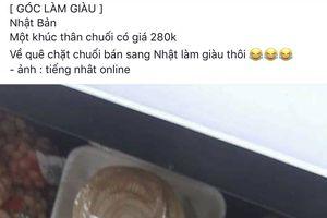 Thân chuối băm cho lợn ăn ở Việt Nam, sang Nhật đội giá ngất ngưởng