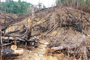 Vụ phá rừng phòng hộ Tiên Lãnh: Kỷ luật 4 cán bộ kiểm lâm