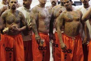 Mafia Mexico và màn phi tang hàng nghìn xác nạn nhân bằng axit
