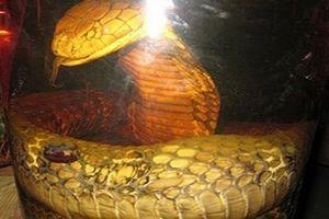 Chuyện dựng tóc gáy về rắn khổng lồ, dài 20m