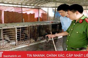 Phát hiện cơ sở nuôi nhốt trái phép động vật hoang dã số lượng lớn tại TP Hà Tĩnh