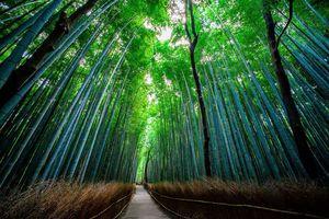 Khám phá những khu rừng bí ẩn nhất thế giới