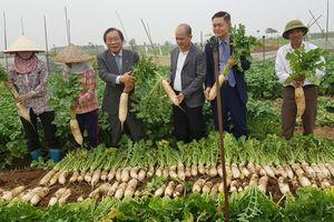 Lavifood xây dựng nhà máy, tuyên bố mua toàn bộ củ cải người dân trồng được