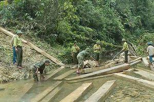Quảng Bình: 3 cán bộ kiểm lâm bị khiển trách khi rừng mất gần 100m3 gỗ