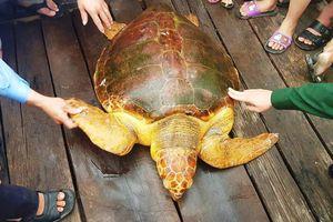 Rùa vàng óng ngư dân Hà Tĩnh vừa bắt được giá trị cỡ nào?