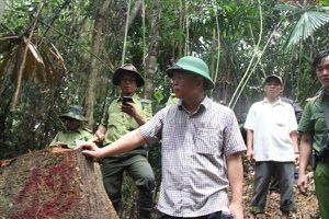 Phó Chủ tịch tỉnh Quảng Nam kiểm tra rừng Đông Giang bị lâm tặc tàn phá