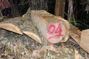 Kiên quyết xử lý vụ phá rừng trái phép tại Quảng Nam