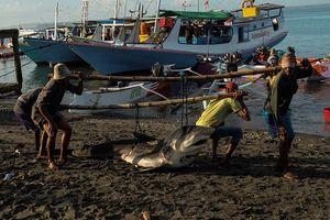 Tận mục cuộc sống của ngư dân Indonesia săn cá mập
