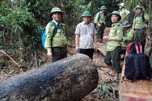 Lãnh đạo tỉnh Quảng Nam kiểm tra khu rừng bị phá ở huyện Nam Giang