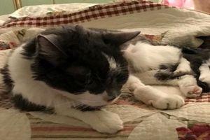 Mèo cưng bị suy thận, nữ chủ nhân làm điều ấm áp không ngờ
