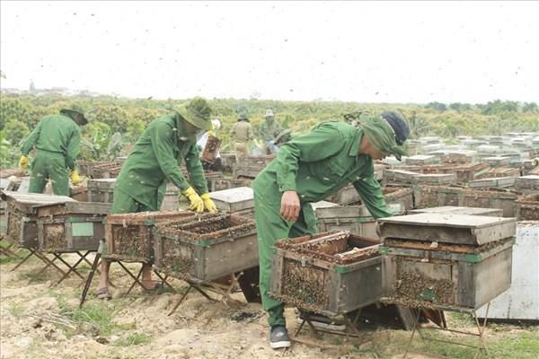 Hối hả 'vào mùa' thu hoạch mật ong ở Hưng Yên
