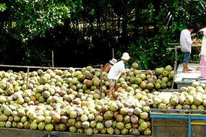Xuất khẩu dừa tươi sang Mỹ
