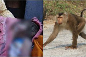 Khỉ lẻn vào nhà bắt cóc bé sơ sinh khi cháu đang nằm bên cạnh mẹ