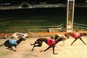 Đà Nẵng làm trường đua ngựa, đua chó rộng hơn 580.000 m2