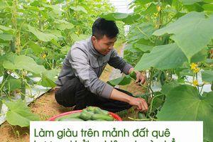 Chàng kỹ sư công nghệ thông tin bỏ phố về quê trồng rau