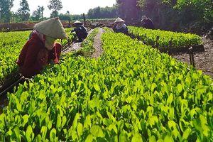 Gieo ươm cây trồng bằng bầu hữu cơ: Thân thiện với môi trường