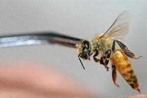 Bé trai 19 tháng tuổi nguy kịch, nhập viện với gần 1.000 vết ong đốt