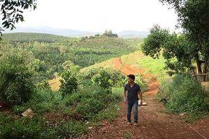 Buông lỏng quản lý rừng, Ban thường vụ Huyện ủy Đắk G'long bị kỷ luật