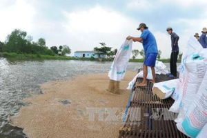 Triệu phú nuôi cá bè ở cù lao Thới Sơn