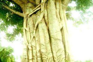 Vụ cây 'quái thú': Phó chủ tịch xã ký bừa
