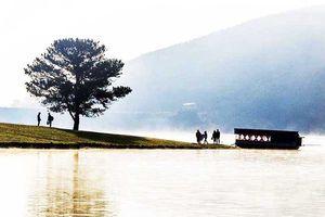 Nam thanh niên tự tử bên 'cây thông cô đơn' ở hồ Suối Vàng