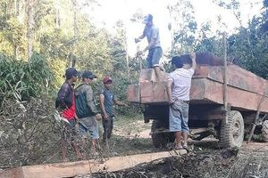 Đắk Lắk: Chủ tịch xã báo đi bắt gỗ lậu, kiểm lâm viện lý do vắng mặt