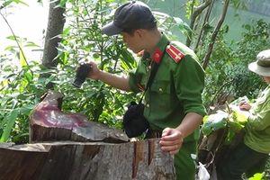 Chiến công của những người lính bảo vệ môi trường