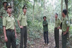 Hà Tĩnh triển khai nhiệm vụ phòng cháy, chữa cháy rừng năm 2018