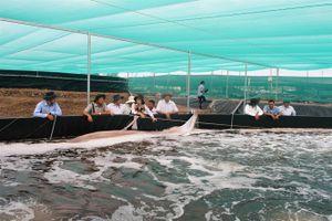 Cần đầu tư mạnh nuôi tôm nước lợ vùng U Minh Thượng
